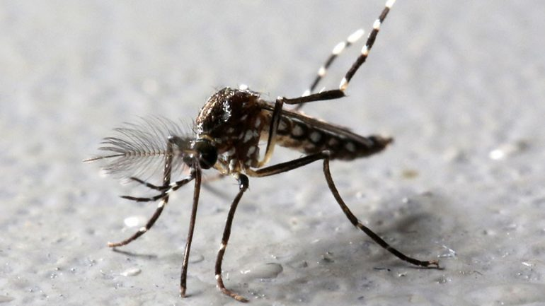 Google's Life Science Division To Release 20 Million Infected Mosquitoes In California