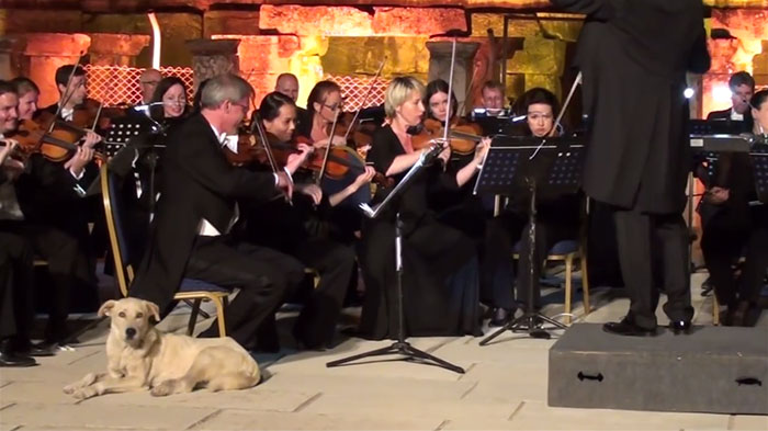 Dog Interrupts Orchestra Performance In Cutest Way Ever, Gets Rounds Of Applause