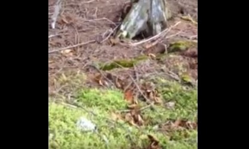 Man Walking Through Forest Captures Unbelievable Footage, As Ground Changes Before His Eyes
